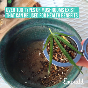CBD mushroom tea
