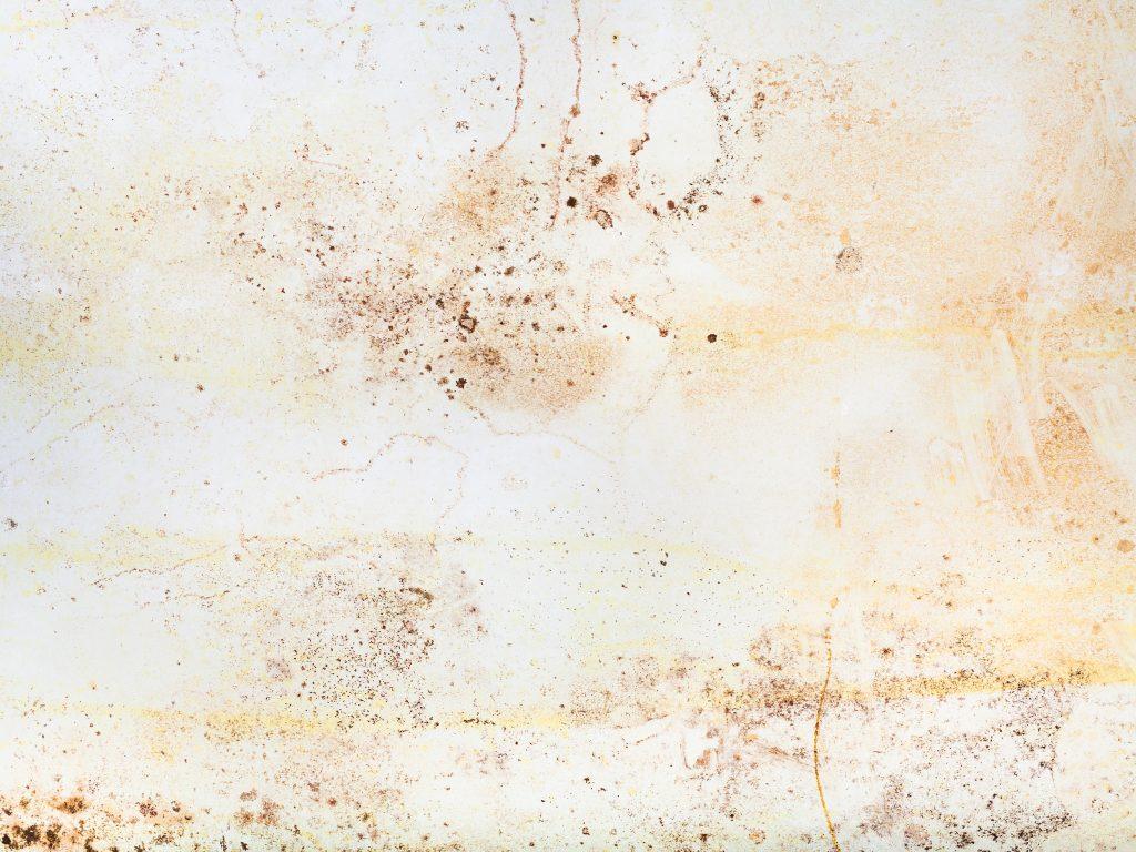 toxigenic mold