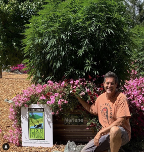 John Casali poses with the Sweet Marlene strain named after his late mother and his Fish Friendly Farming certification. Photo courtesy of Huckleberry Hill Farms Instagram.
