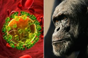 the source of the HIV infection in humans was from a chimpanzee