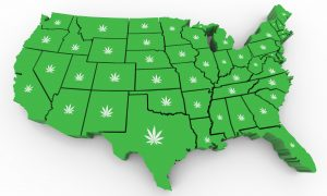 The United States with cannabis plants over each state.