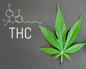 The cannabis leaf with the chemical formula for THC.