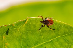 lyme disease cannabis