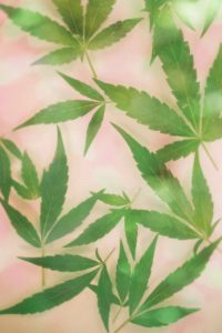 green and white leaf painting