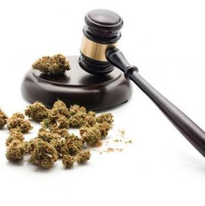 Oakland's cannabis social equity program