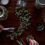 is cannabis a gateway drug?